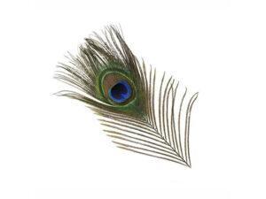 Peacock Eyefeather Fjær